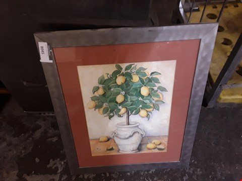 Lot 8045 FRAMED PLANT PICTURE